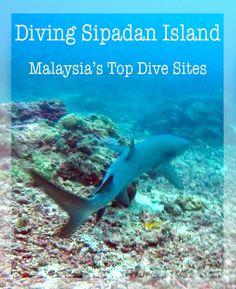 Sipadan Island: Diving at Malaysia's top dive site