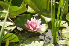 lekno Flowers, Plants, Flora, Plant, Royal Icing Flowers, Flower, Florals, Bloemen, Planting