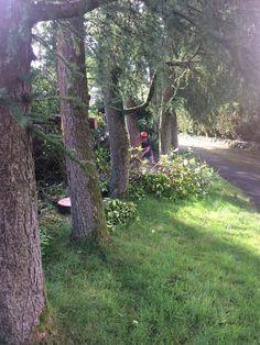 Tree Surgeons, Plymouth, Surgery, Plants, Plant, Planets