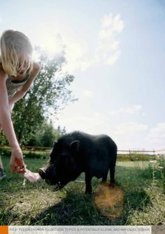 ADVICE FOR OWNERS OF PET PIGS AND 'MICRO' PIGS