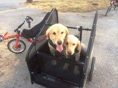 pupRUNNER run&ride Trailer for Dogs
