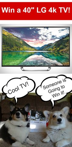 """#spon Watch a super cute video of dogs and cats reacting to TV and enter to win an AMAZING 40"""" LG 4K TV (seriously amazing, watch the video and you will see what I mean). #MyPetLovesLG4KTV"""