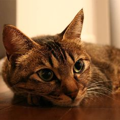 #instagramcats #catsagram #petstagram #catlover #instacat #catoftheday #instagood #catsofinstagram #mycat #cat #cats #ねこ #猫
