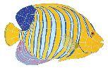 Regal Fish ceramic tile mosaic