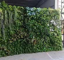 33 Indoor Outdoor Boxwood Walls Ideas Plant Wall Green Wall Artificial Plant Wall