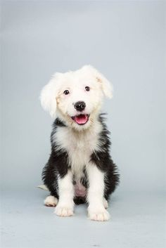 Fabulous Smile (Animal Planet's Puppy Bowl lineup) - January 31