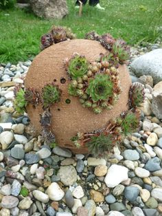 large cement or clay spheres with little indentations for planting succulents or other small plants/flowers