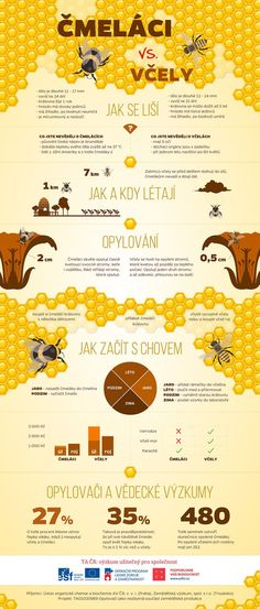 vcely a cmelaci infografika Elementary Science, Montessori, Infographic, Kindergarten, Homeschool, Bee, Knowledge, Education, Learning