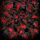 100Pcs Coleus Flower Seeds Rare 4 Kinds Color Perennial Bonsai Dragon Plant Home | eBay Plants For Planters, Home Garden Plants, Bonsai Garden, Orchid Seeds, Flower Seeds, Euphorbia Flower, Blue Flowers, Pink Roses, Black Mondo Grass