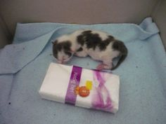 4 days old. And the size of a package paper tissues