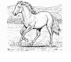 Horse Coloring Pages For Adults | Coloring Pages Trend