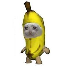 Cute Cats, Funny Cats, Funny Animals, Cute Animals, Best Memes, Dankest Memes, Funny Memes, Meme Meme, Dog Memes