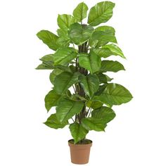 Nearly Natural Leaf Philodendron Tree in Pot & Reviews   Wayfair