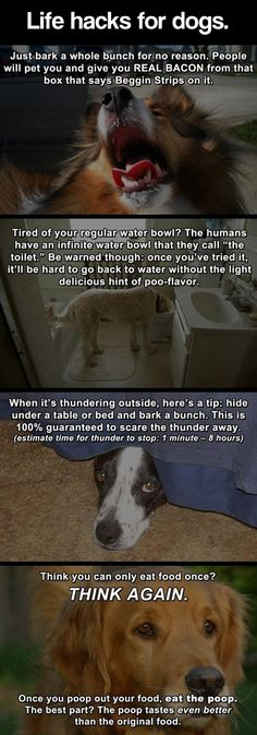 A dog's life is easy // funny pictures - funny photos - funny images - funny pics - funny quotes - #lol #humor #funnypictures