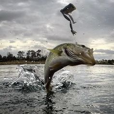 """Receive wonderful ideas on """"Bass Fishing"""". They are actually accessible for you on our website. Bass Fishing Tips, Fishing Knots, Trout Fishing, Kayak Fishing, Bass Boat, Largemouth Bass, Fishing Outfits, Fishing Equipment, Saltwater Fishing"""