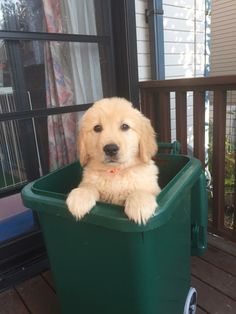 Okay Mr. Garbage Man you can take it away, there aren't any treats in here.