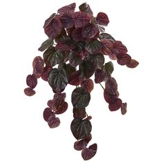 Nearly Natural Indoor 25 Peperomia Hanging Bush Artificial Plant (Set of - The Home Depot Silk Plants, Foliage Plants, Faux Plants, Fake Plants Decor, Hanging Plants, Artificial Boxwood, Artificial Plants, Bush Plant, Boxwood Topiary