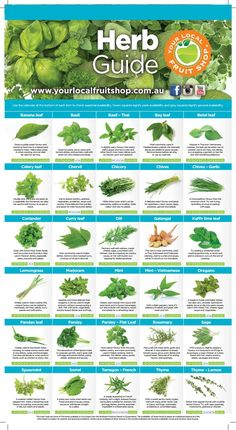 Your Local Fruit Shop Herb Guide - Fruit Growing Herbs, Growing Vegetables, Fruits And Veggies, Healing Herbs, Medicinal Plants, Herb Guide, Fruit Shop, Homemade Spices, Food Charts