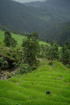 Nepali woman farming near Mont Manaslu, Gorka area, Nepal