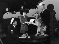A German shepherd is accepted for sentry duty by the Coast Guard, January 1941 Photograph by J. Baylor Roberts/ National Geographic.