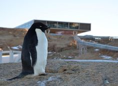 Penguins cant fly but they can certainly build space ships in Antarctica. Pic1