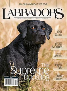 Mark L Atwater Photography Hunting Magazines, Labradors, Doberman, Labrador Retriever, Favorite Things, Outdoors, Dogs, Baby, Photography