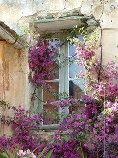 Old window - Ventana vieja con bugambilia