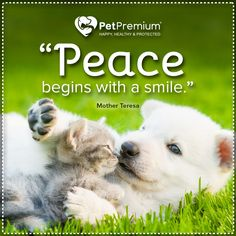 Peace begins with a smile. Little Puppies, Cute Puppies, International Day Of Peace, Mother Teresa, Pet Health, Dog Care, Funny Dogs, Your Dog, Dog Lovers