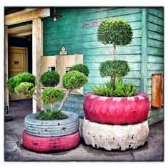 Manicured shrubs in old re-used tires  100 Container Garden Ideas For Arkansas, Texas, Tennessee and The South, Part 3 Jonesboro | Memphis | South Lawn Care Landscape Jonesboro Garden Flowers Container Gardens Best Flowers For Container Gardens BadAsFlowers Arkansas Garden Annuals