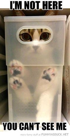 cats stacked in plastic boxes - funny | Not Here | Funny As Duck | Funny Pictures
