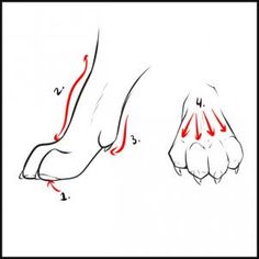 How to draw wolves.  STEP 3. Some have problems drawing pawslegs of a wolf. Some tend to draw the arm connected to the paw straight. Add a slight bump that evens out at base of paw. Most animals have a dew claw, a small paw finger laying diagonally from the foreleg, seeing pads underneath the paws a bit. Nails are subtly visible in this view.  On front view, most of the nails are seen. Nails are level/even with each other. To make it more realistic, add defining lines to make paw fingers…