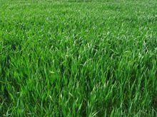 Faire ou refaire son gazon, semer une pelouse