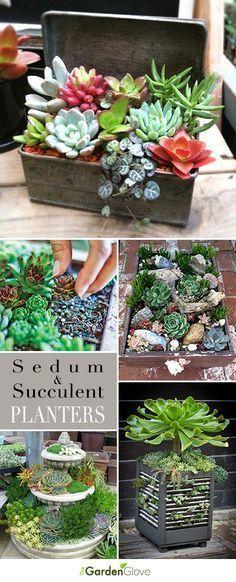 Sedum and Succulent Planters • Tips, Ideas and Tutorials!