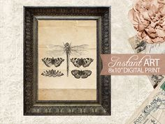 Hey, I found this really awesome Etsy listing at https://www.etsy.com/listing/172910591/printable-butterfly-dragonfly-art-old