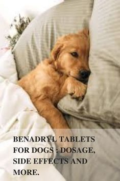 11 Best Benadryl for dogs dosage images in 2017   Dogs