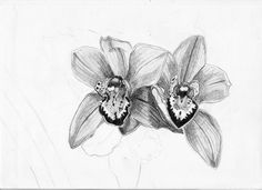 Orchid Sketch | Orchid sketch by pktommy on deviantART