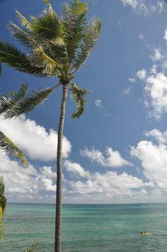 Cocont tree, Lanikai beach....