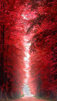 Burning Red Forest – Roskilde, Denmark would be a perfect hallway full length picture/painting with black doors. Red Tree, Free Canvas, Black Doors, Tree Forest, Stock Art, Modern Photography, Antique Maps, Wood And Metal, Red Wood