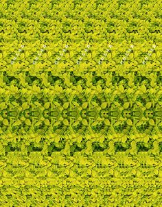 3D PHOTOGRAPH----giraffe CAN YOU SEE IT?