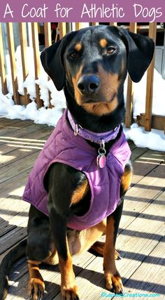 Kurgo's Loft Jacket is perfect for athletic dogs who love to hike and adventure in inclement weather. Check out our review! ©LapdogCreations #sponsored Dog Mom | Dog Products | Dog Coat | Hiking with Dogs | Rescue Dog | Life with Dogs