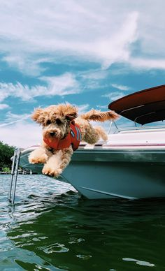 – Animal Wallpaper And iphone Cute Little Animals, Cute Funny Animals, Cute Dogs And Puppies, Doggies, Animal Wallpaper, Dog Wallpaper, Cute Animal Pictures, Dog Pictures, Animals And Pets