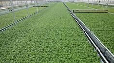 Walmart Corporate - How Sustainable Growing Technology Creates USDA-Certified Herbs