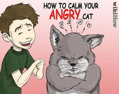 How to Calm Your Angry Cat