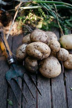 Amaranth-crusted flathead fillets and roasted sebago potatoes Those Recipe, Seasonal Food, Real Food Recipes, Pantry, Irish, Roast, Stuffed Mushrooms, Potatoes, Vegetables