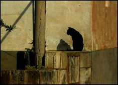 #ailing #animal #animal world #animals #black cat #brown #cat #domestic cat #hispanic #lapsed #lichtspiel #light #mallorca #mast #ocher #shades of brown #shadow #shadow play #silhouette #south #still #still life #stone