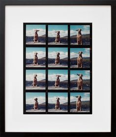 Fay on the Dock, by WIlliam Wegman. I've loved his work since I was a kid :)