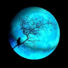 Cat in the Moon ~ Awesome color!
