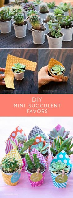 Mini Succulent Favors for a Baby Shower Make these Mini Succulent party favors, just wrap them with scrapbook paper, add a lable and done! Simple and easy! -Make these Mini Succulent party favors, just wrap them with scrapbook paper, add a lable and done! Succulent Party Favors, Succulent Gifts, Garden Party Favors, Succulent Ideas, Party Garden, Farm Party, Suculentas Diy, Cactus Y Suculentas, Deco Floral