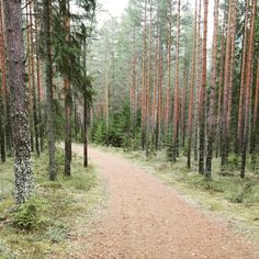 Lenkillä, powerwalk in the forest