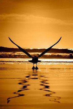 With Love from Coronado #Beach #photography #photo